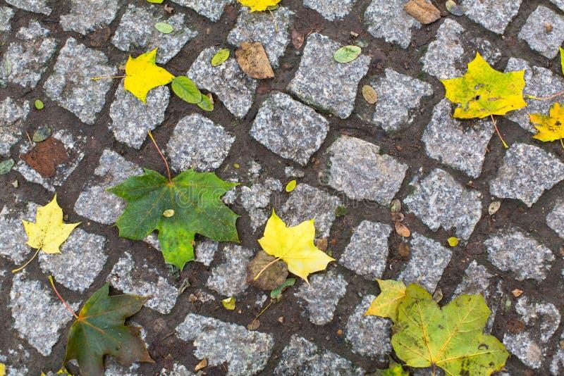 Gelb gefallene Blätter auf den Kopfsteinen lizenzfreies stockbild