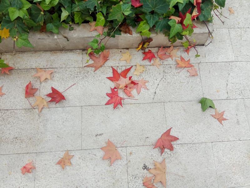 Gelb gefallener Autumn Leaves auf dem an B?rgersteig gepflastert mit Gray Concrete Paving Stones- und Gras-Rasen-Draufsicht lizenzfreie stockfotografie