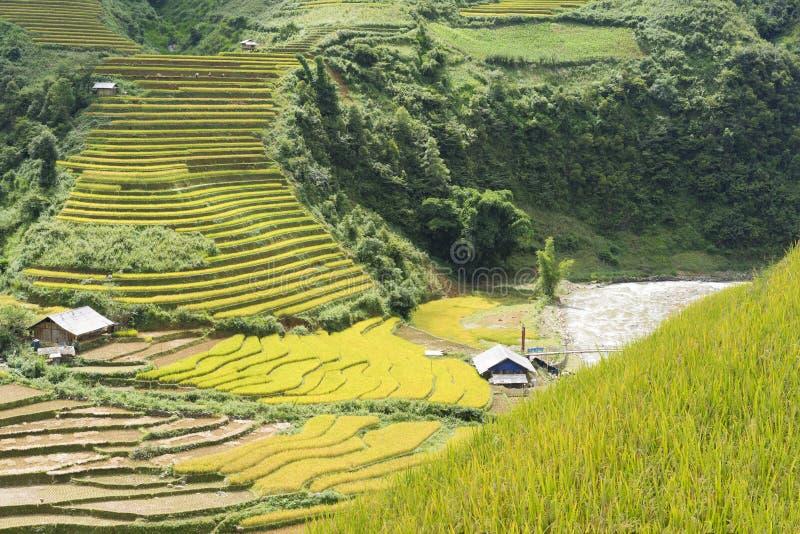Gelb, grünen Sie, reisen Sie, Natur, Landschaft, Asiat, die Ethnie, ländlich, Feld, Anlage, Land, Tal, Berg, die Ökologie, tropis lizenzfreies stockfoto