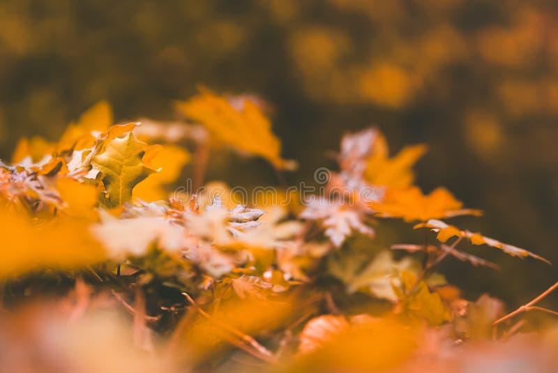 Gelb lässt Niederlassungen des Herbstlandschaftshintergrundes stockfoto