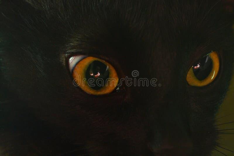Gelb mustert schwarze Katze stockbilder