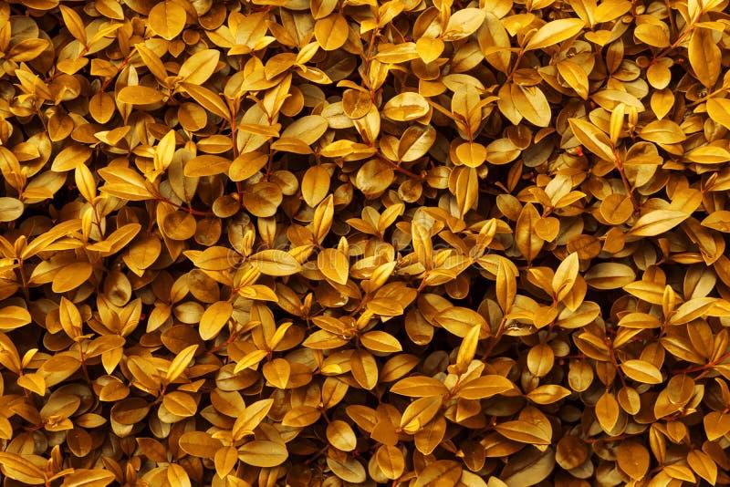 Gelb-orangees goldenes Laubmuster des Herbstfallhintergrundes Vibrierende klare warme Palette der Blattbeschaffenheit Farb lizenzfreies stockfoto