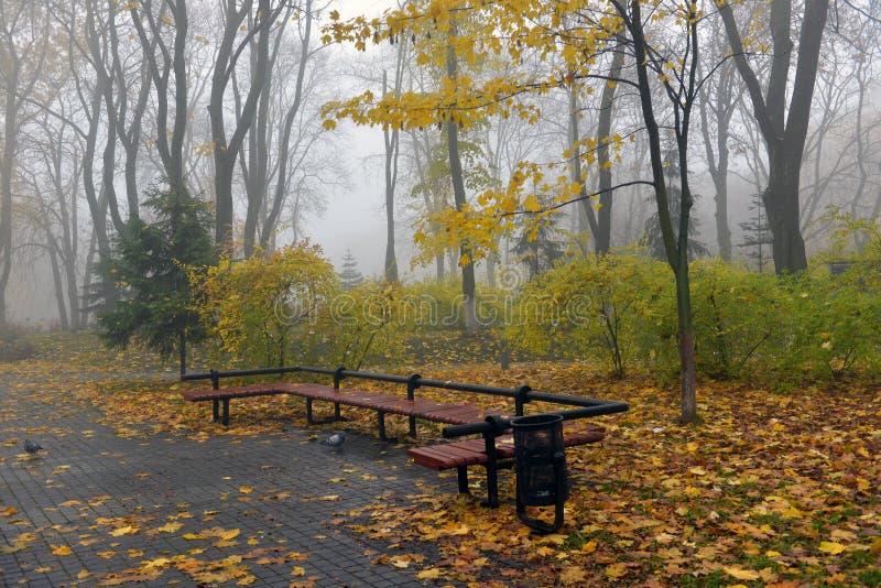 Gelb verlässt auf einer Bank im Park lizenzfreies stockbild
