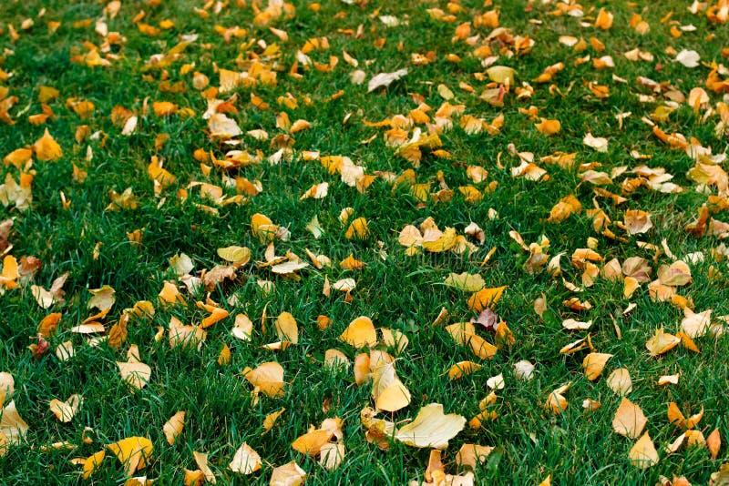 Gelbblätter auf grünem Gras im Herbst lizenzfreies stockbild