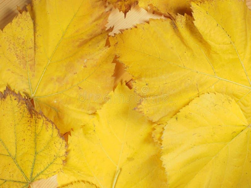 Gelbblätter im Fallhintergrund lizenzfreie stockfotos