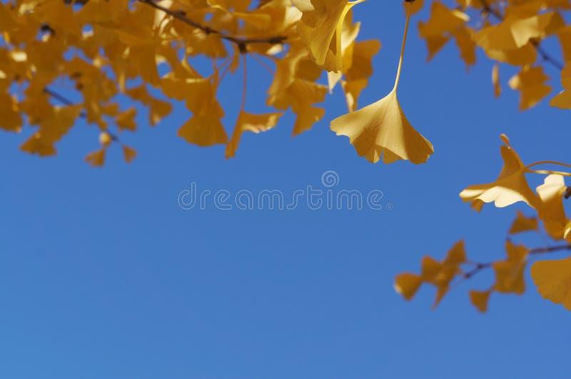 Gelbblätter mit Hintergrund des blauen Himmels lizenzfreie stockfotos
