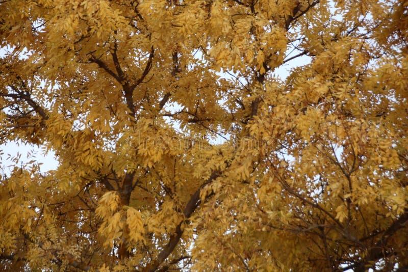 Gelbbl?tter im Herbst stockfotografie