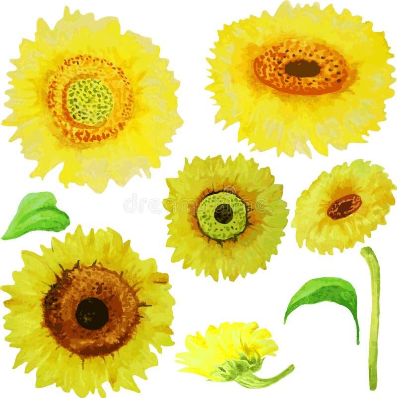 Gelbe Aquarellsonnenblumen lokalisiert auf weißem Hintergrund stock abbildung