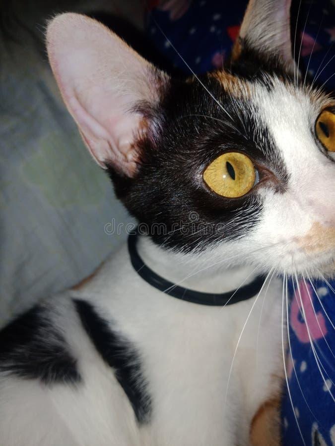 Gelbe Augen lizenzfreies stockfoto