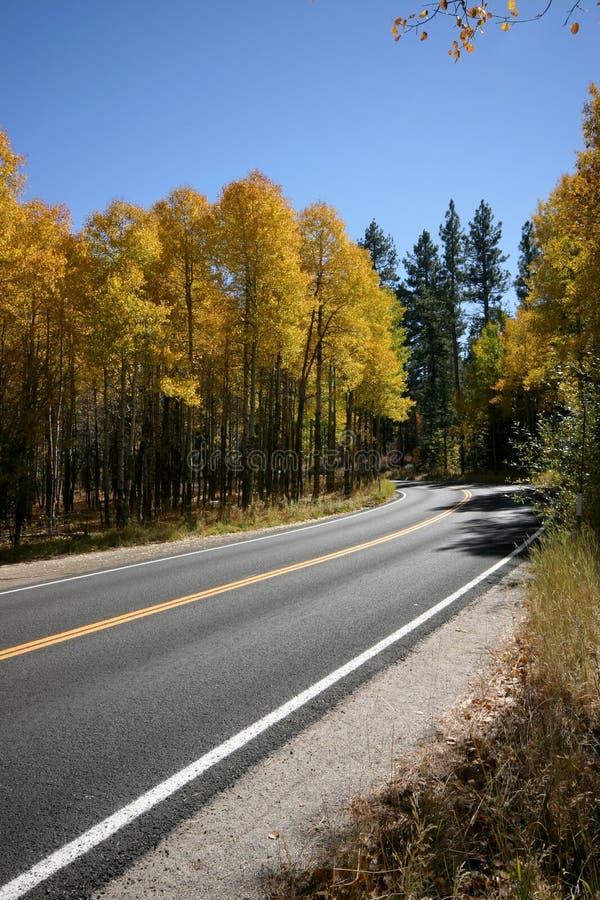 Gelbe Bäume durch eine gebogene Straße lizenzfreie stockbilder