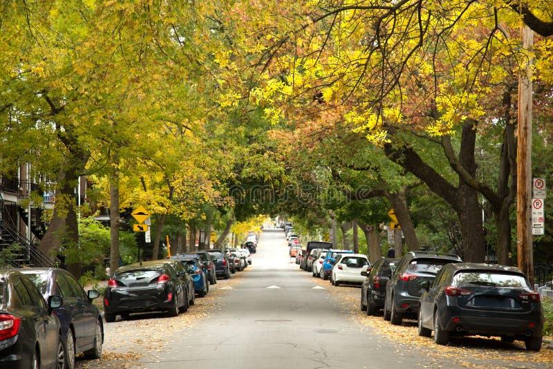Gelbe Bäume in einer Straße von Montreal lizenzfreie stockfotos
