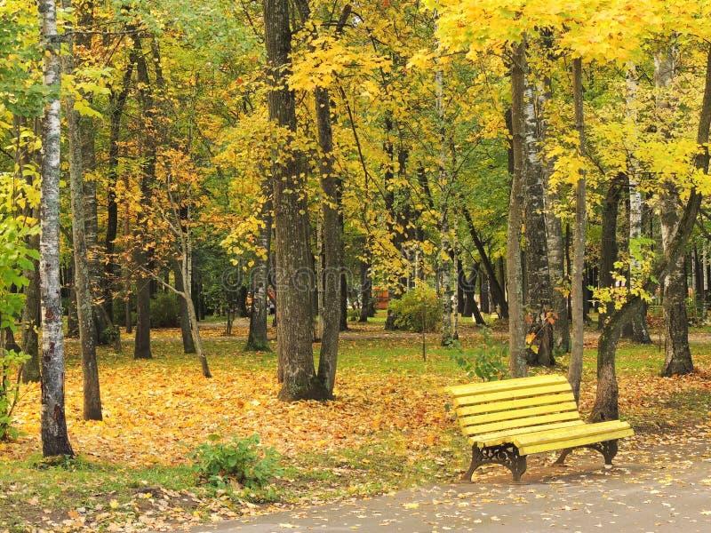 Gelbe Bank im Herbst Park lizenzfreie stockfotos