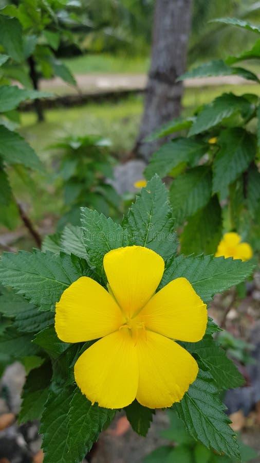 Gelbe Bell stockfotografie