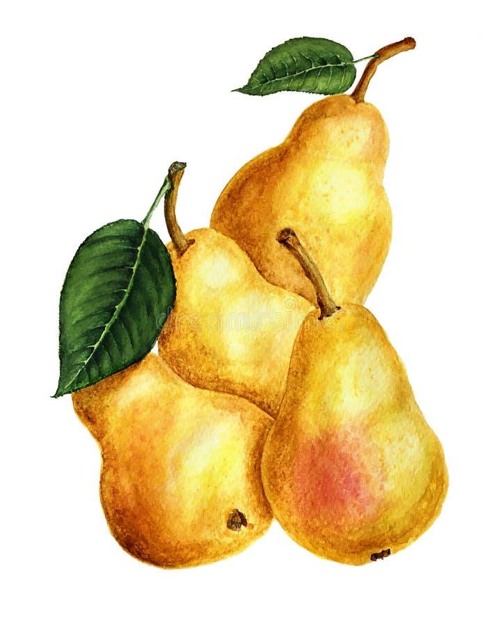 Gelbe Birnenaquarellillustration lokalisiert auf einem weißen Hintergrund stockfotografie