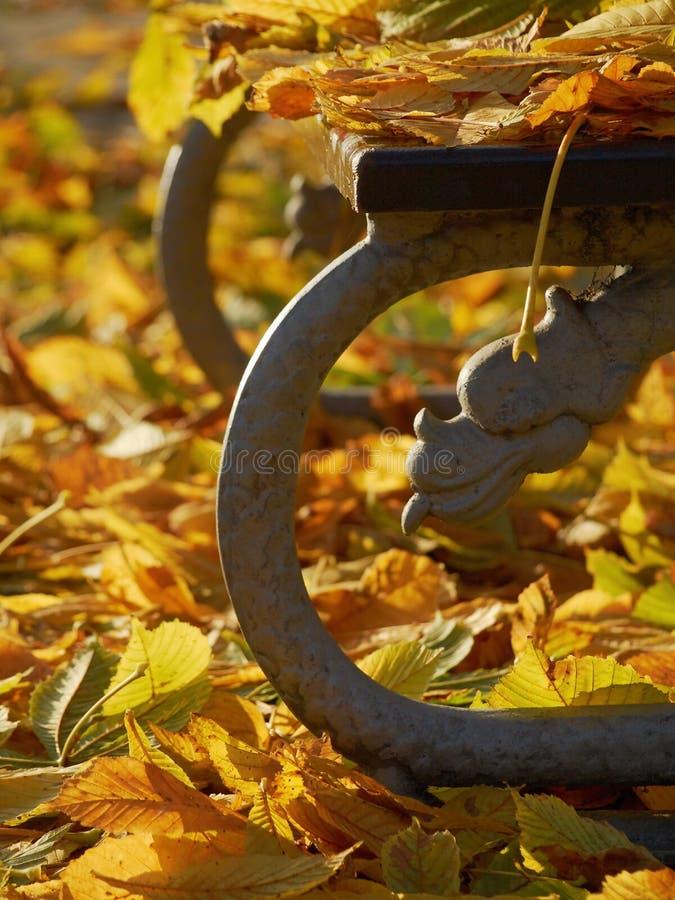 Gelbe Blätter auf der Bank im Herbst parken stockfotos
