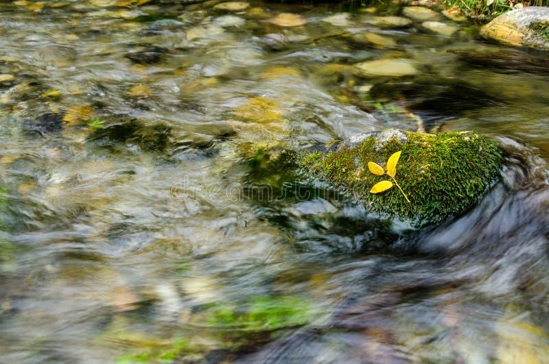 Gelbe Blätter, die auf Moos stillstehen stockbild