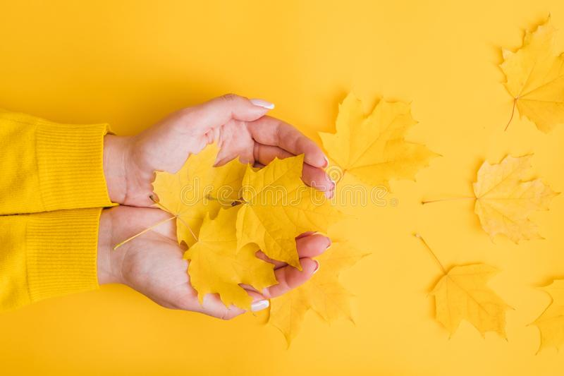 Gelbe Blatthände des Herbstnaturschönheitsfalles lizenzfreies stockfoto