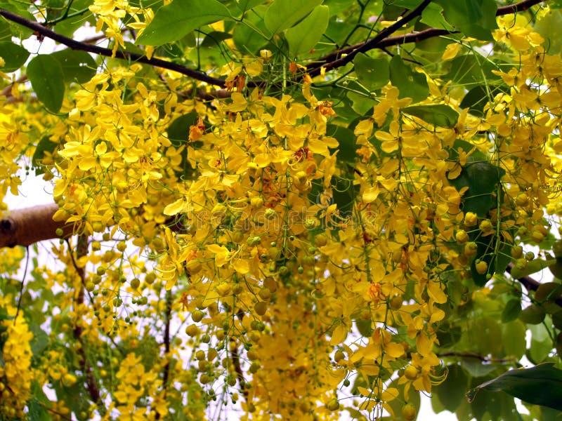 Gelbe Blume 02 stockfoto