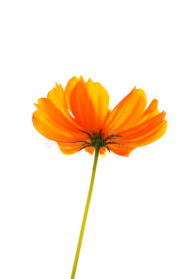Gelbe Blume stockbild
