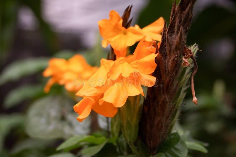 Gelbe Blume lizenzfreie stockbilder