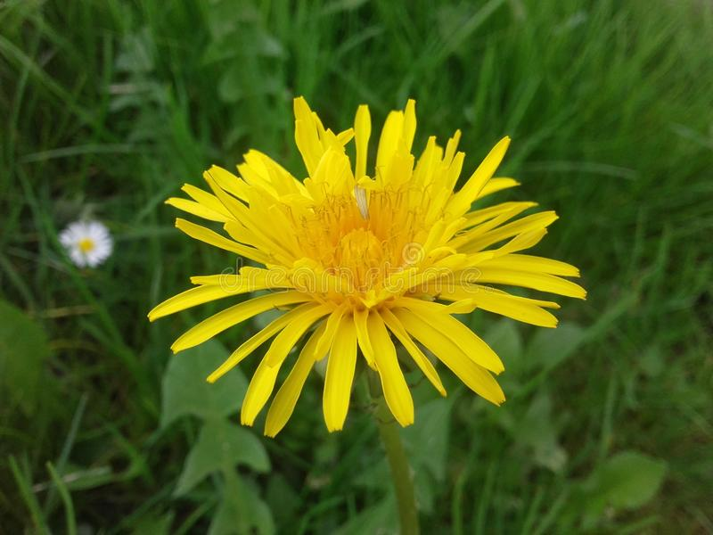 Gelbe Blume lizenzfreie stockfotografie