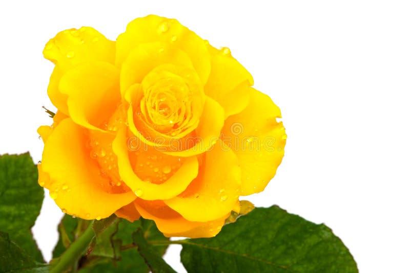 Download Gelbe Blume stockbild. Bild von liebe, betrieb, orange - 9081097
