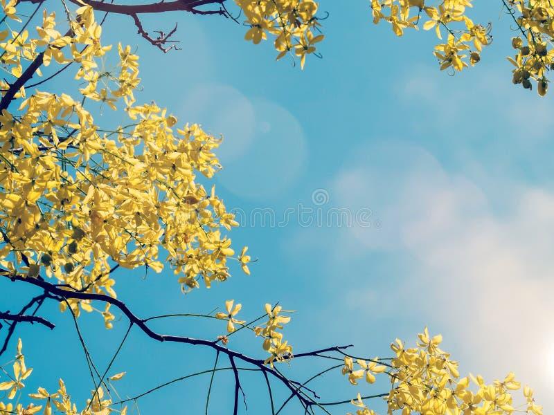 Gelbe Blume auf Baum stockfotos