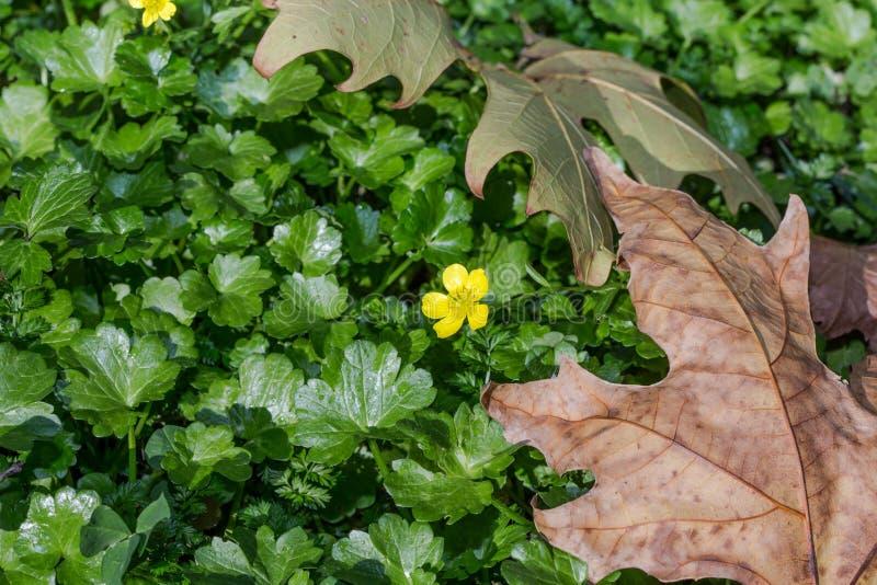 Gelbe Blume auf dem grünen Gras lizenzfreie stockfotografie