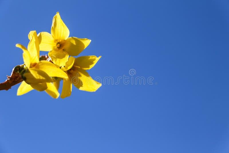 Gelbe Blume auf Hintergrund des blauen Himmels lizenzfreies stockfoto
