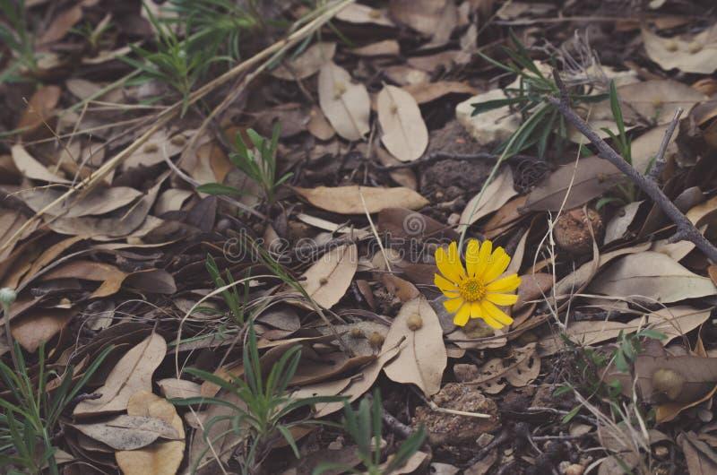 Gelbe Blume in den Blättern stockbilder