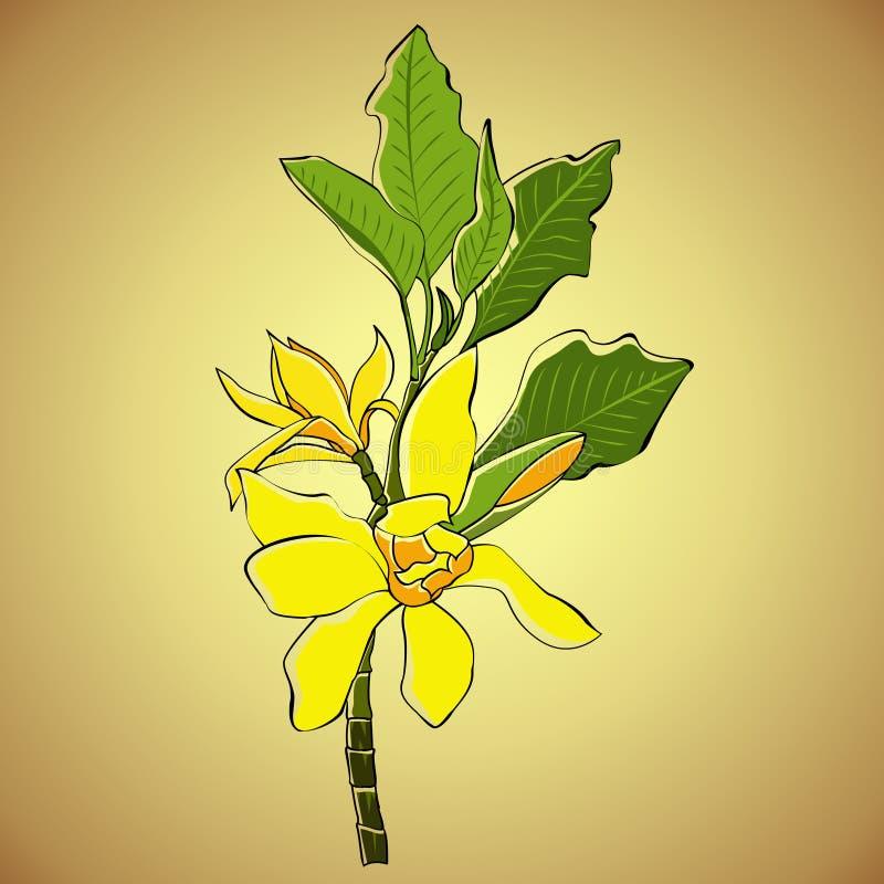 Gelbe Blume der Magnolie lizenzfreies stockbild
