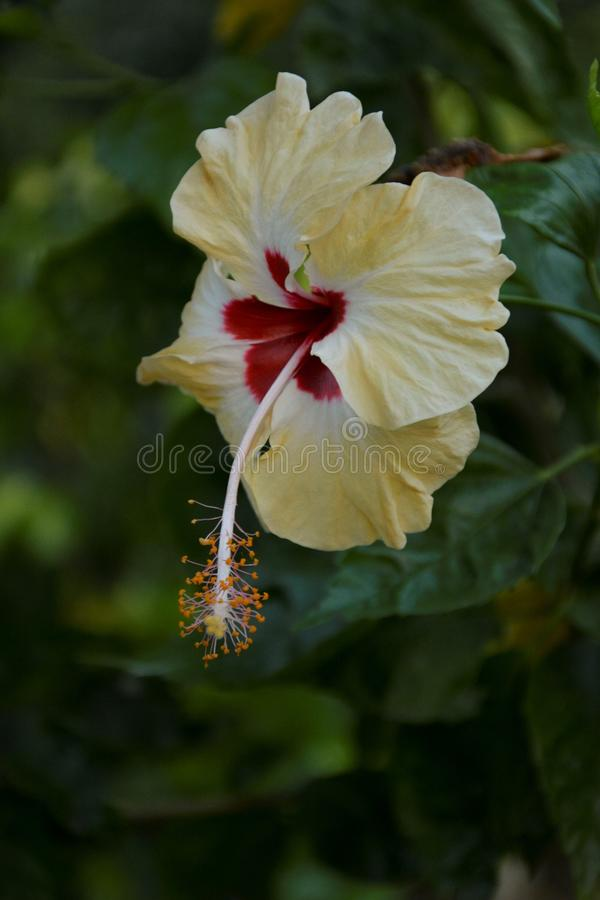 Gelbe Blume hervorgehoben - 2 stockbild
