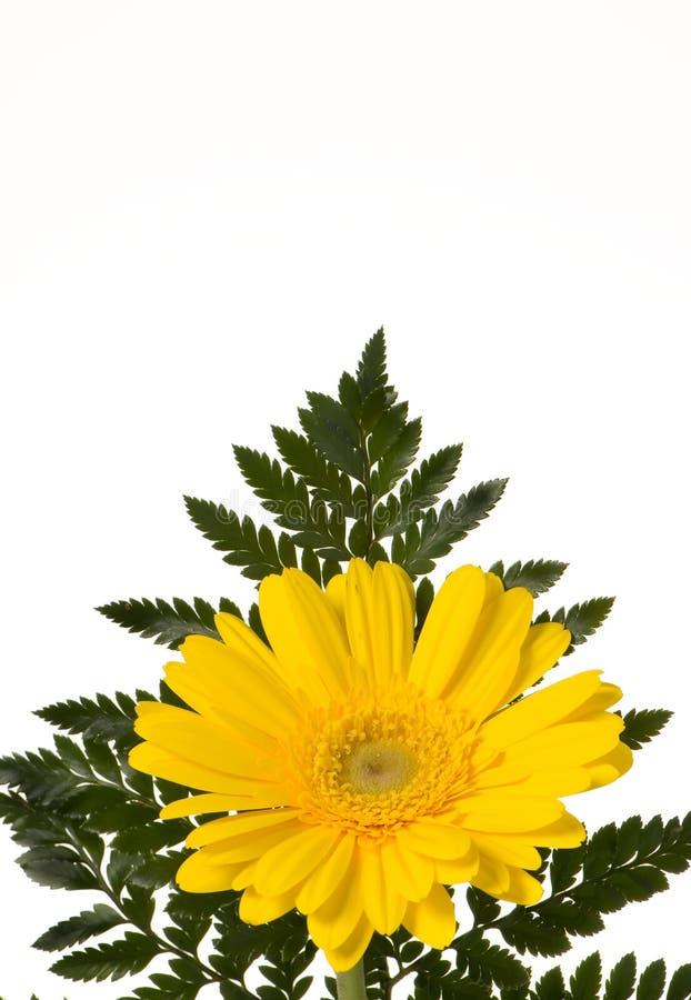 Gelbe Blume mit Farn stockfotos