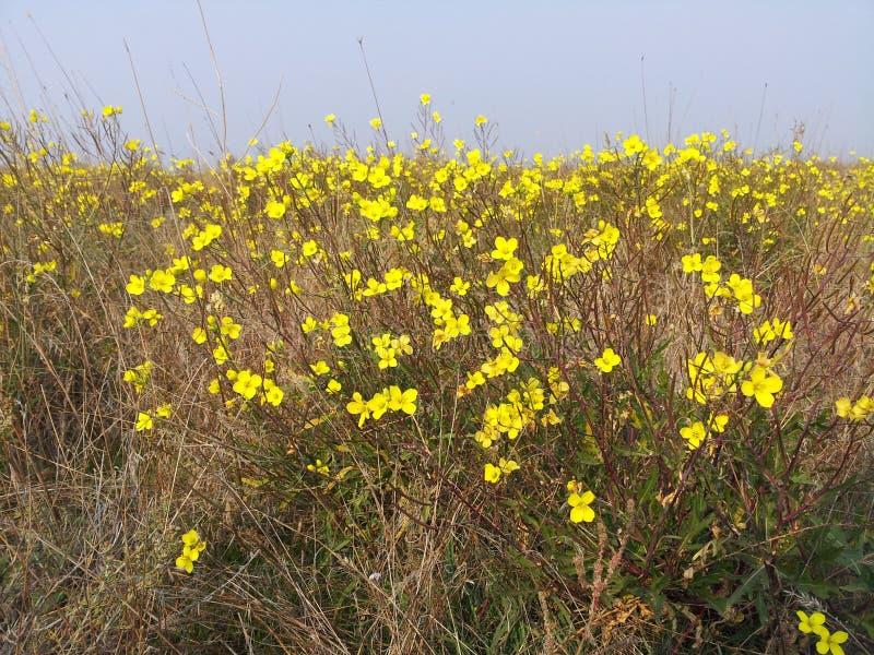 Gelbe Blume und blauer Himmel lizenzfreie stockfotos