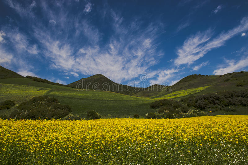 Download Gelbe Blume Unter Den Wolken Stockfoto - Bild von grün, gelb: 27731322