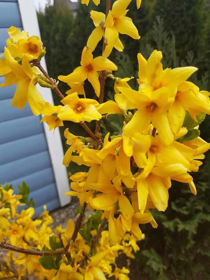 Gelbe Blumen stockfoto