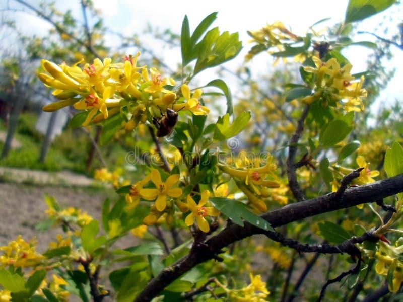 Gelbe Blumen auf einer Niederlassung lizenzfreies stockbild