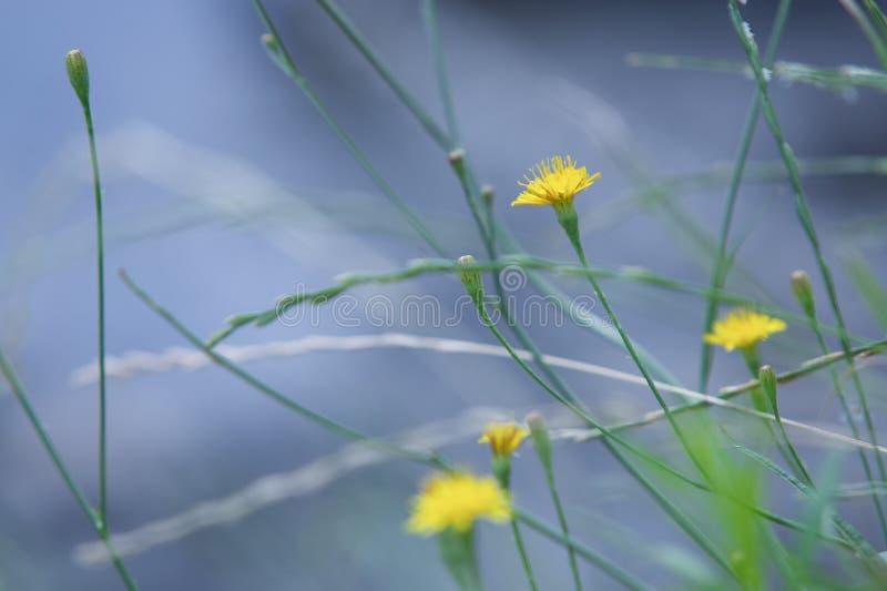 Gelbe Blumen auf Flussufer stockbild