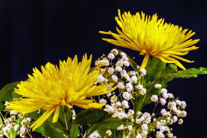 Gelbe Blumen auf Schwarzem stockfoto