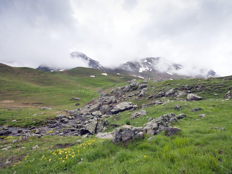 Gelbe Blumen an Col. de Vars in den französischen Alpen in Haute Provence stockfoto