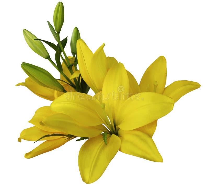 Gelbe Blumen der Lilien, auf einem weißen Hintergrund, lokalisiert mit Beschneidungspfad schöner Blumenstrauß von Lilien mit grün stockfotografie