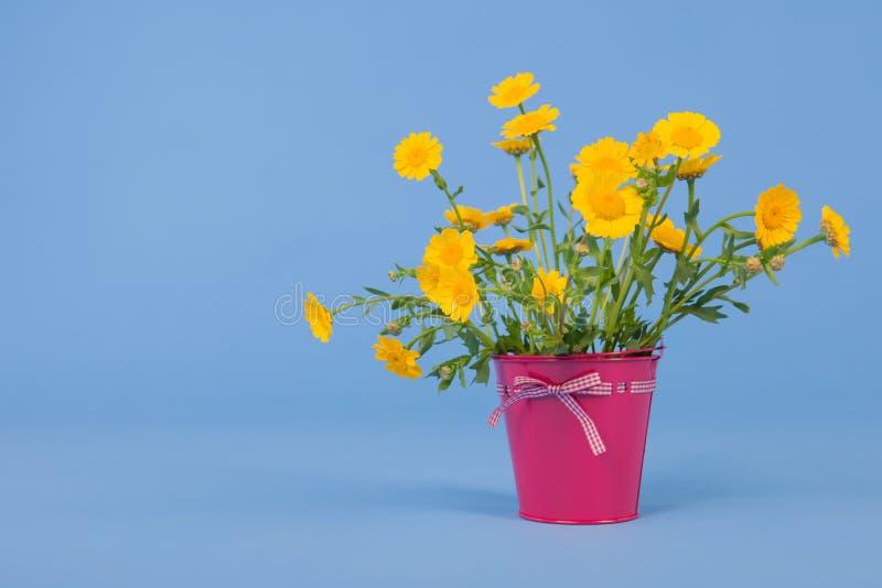 Gelbe Blumen des Blumenstraußes auf blauem Hintergrund stockbilder