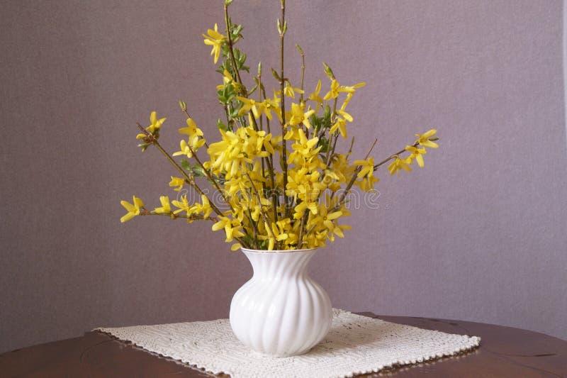 Gelbe Blumen des Frühlinges - Forsythie stockfoto