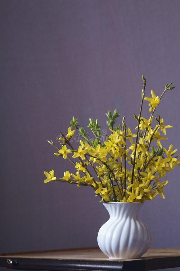 Gelbe Blumen des Frühlinges - Forsythie stockbilder