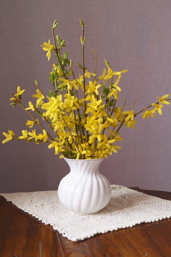 Gelbe Blumen des Frühlinges - Forsythie stockbild