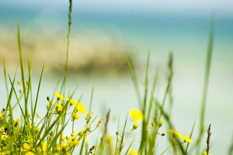 Gelbe Blumen durch das Meer. lizenzfreie stockfotografie