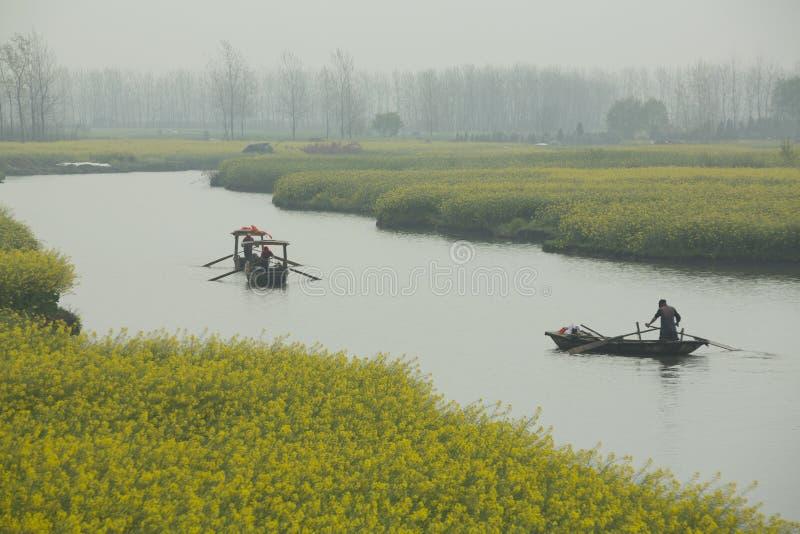 Gelbe Blumen durch Fluss im Frühjahr lizenzfreie stockfotografie