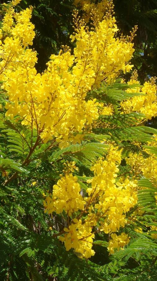 Gelbe Blumen, Frühlings-Sommer-Natur-Foto, romantischer Blumendekor lizenzfreie stockbilder
