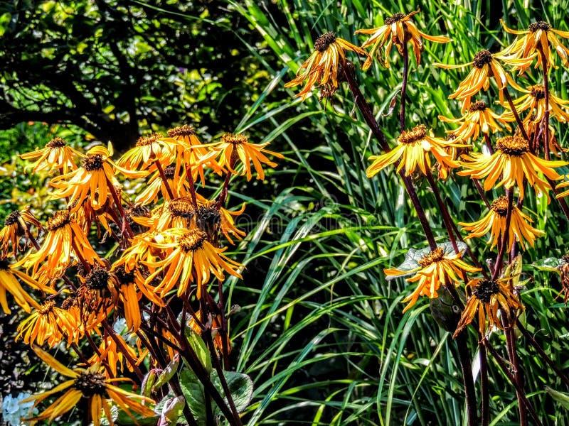 Gelbe Blumen gruppiert stockfotos