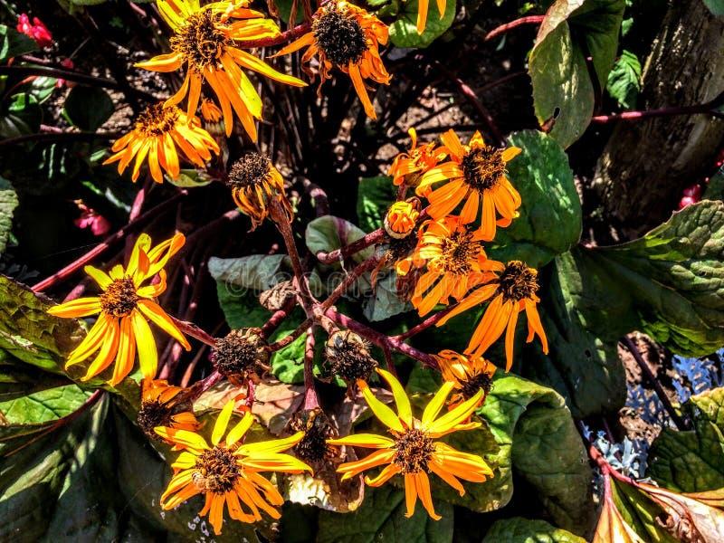 Gelbe Blumen gruppiert stockfoto